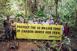 Banner in the Forest in Democratic Republic of Congo. © Kevin McElvaney