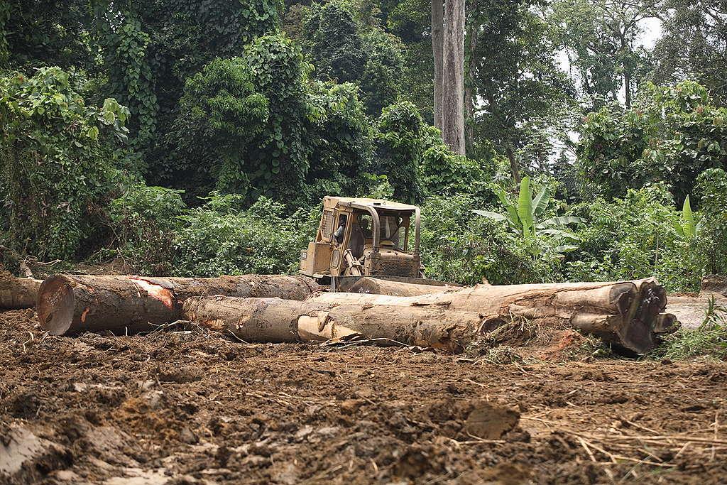 Sodefor Concession in Congo. © Kate Davison