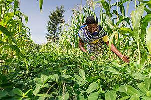 Ecological Farmer in Kenya. © Cheryl-Samantha Owen