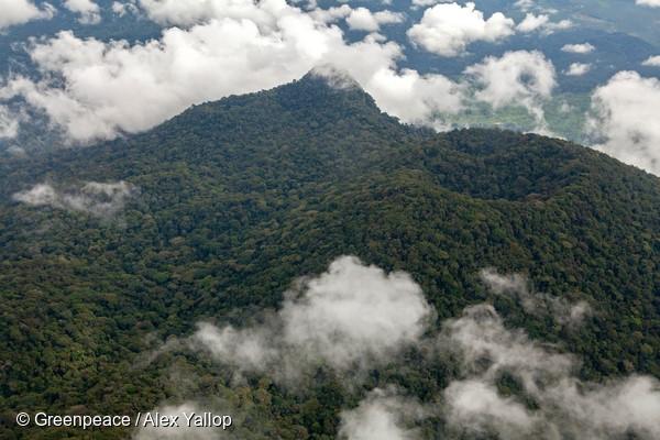 forêt du bassin du Congo