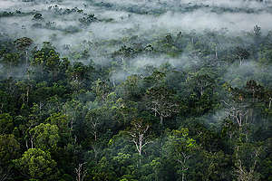 Primary Forest in Papua. © Ulet  Ifansasti
