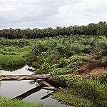 La Norvège et la France menacent les forêts de la RDC