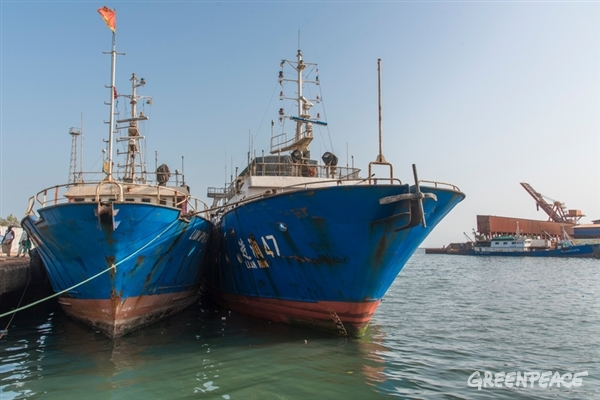 Three Chinese fishing boats under arrest in the port of Conakry. From left: LIAN RUN 34, LIAN RUN 47 and FU YUAN YU 379. They were brought in port by Guinea's fishing authorities after a joint patrol week in the country EEZ with Greenpeace. Illegal fishing gear and sharks fins were discovered on board. For the first time in the fishing history of Guinea, the fines asked to the owners are substantial: 250 000 € for the first two and 350 000 € for the third boat plus confiscation of the fish catch of all vessels.