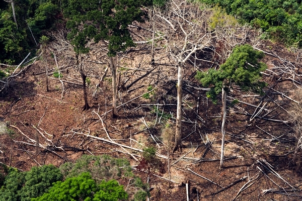 Peatland forest loss, Democratic Republic of Congo