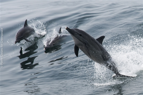 dolphins sierra leone hope in west africa