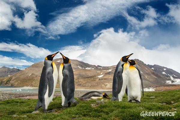 Emperor Penguins in the Antarctic