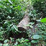 Les donateurs de la RDC décaissent 40 millions de dollars après l'octroi illégal de 4000km2 de forêts