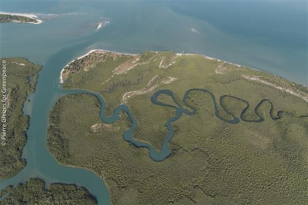 mangrove turtle island hope in west africa