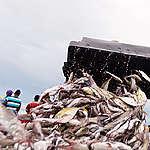 Artisanal Fishermen in Senegal. © Clément  Tardif
