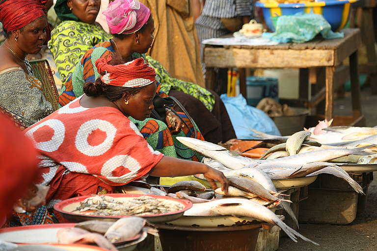 Fish Market - Defending Our Oceans Tour (Guinea: 2006). © Steve Morgan