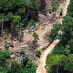 Exploitation forestière industrielle en RDC: 24 concessions nulles et non avenues doivent être immédiatement restituées
