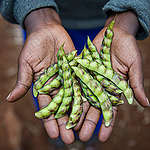 How To Guide 2: Ensuring Healthy Soil for High Yields