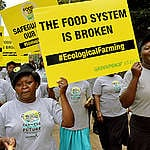 Ecological farming will address food insecurity, not GMOs
