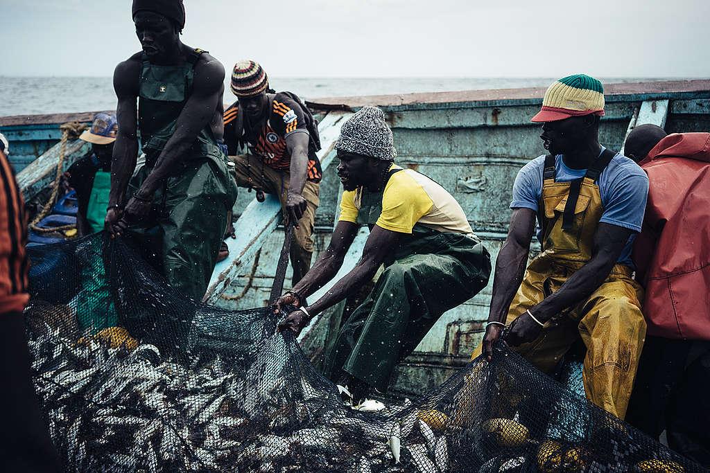 West African small-scale Local Fishermen in Senegal. © Liu Yuyang / Greenpeace