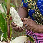 Ecological Farmer in Kenya. © Cheryl-Samantha Owen / Greenpeace