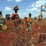 Malawi Famine Documentation. © Greenpeace / Clive Shirley