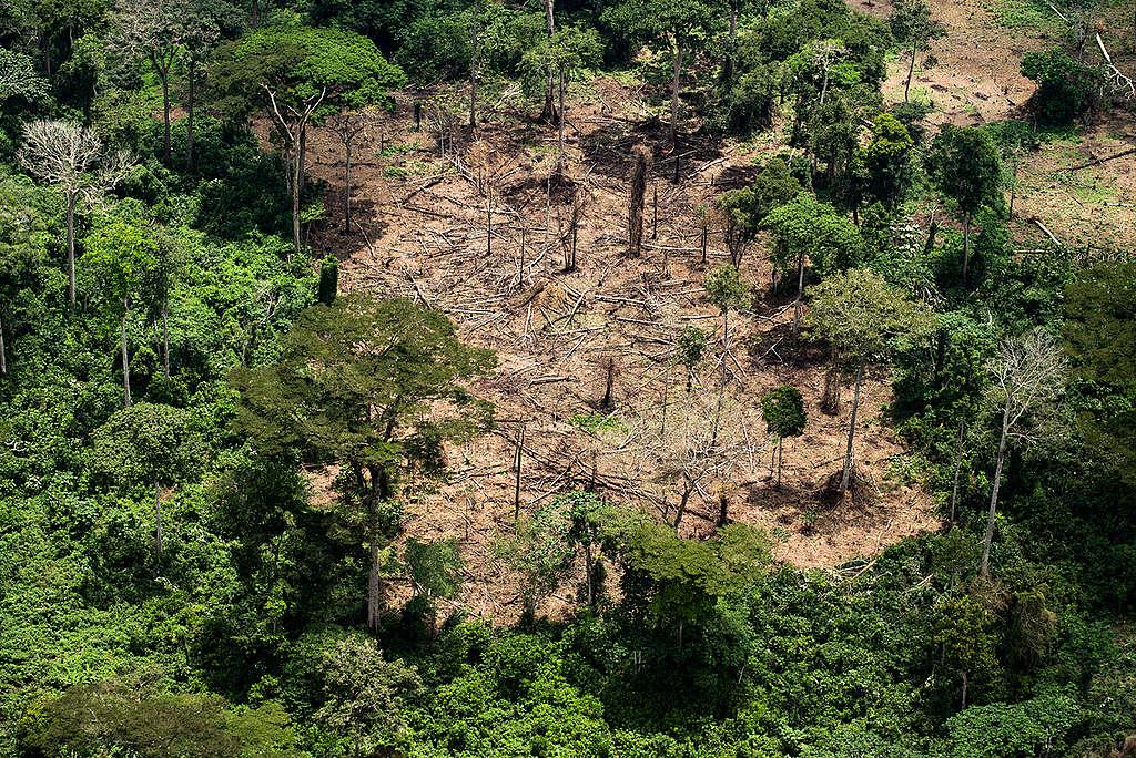 Logged Area in Peatland Forest in DRC. © Daniel Beltrá / Greenpeace