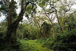 Virunga National Park in DRC. © Greenpeace / Jan-Joseph Stok