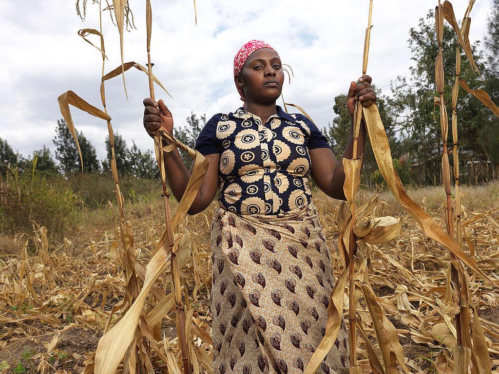Ruined Crops in Elizabeth Mueni Maundu's Garden in Kenya. © Peter Caton / Greenpeace