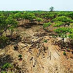 Plus de 40 ONG appellent les gouvernements donateurs à intervenir pour arrêter les nouveaux plans d'exploitation forestière dans la forêt tropicale du Congo