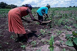 Traditional Milapo Farming in Botswana. © Greenpeace / Tony Marriner