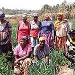 Greenpeace Afrique appelle le gouvernement gambien à mettre fin à l'accaparement des terres et à l'expansion des usines de farine et d'huile de poisson.