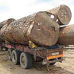 Greenpeace Afrique réagit après la décision du Président de la RDC de suspendre les concessions forestières illégales prises par son ancien Ministre de l'environnement