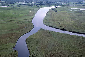 Okavango River and Floodplain. © Greenpeace / Tony Marriner