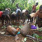 Forest Documentation in Cameroon. © Greenpeace / Kate Davison