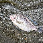 kenyas-poisoned-waters-blog