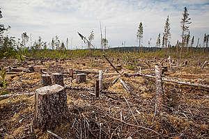 Clearcut in Cree Territory in Broadback Valley. © Greenpeace