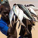 De grandes entreprises européennes complices de l'insécurité alimentaire en Afrique de l'Ouest