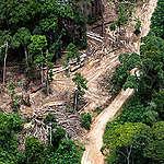 La Belgique en Forêt Congolaise : Est-ce le Grand Retour ?