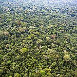 Peatland Forest in DRC. © Daniel Beltrá / Greenpeace
