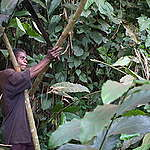 To stop greenwashing deforestation – banks too must be reined in