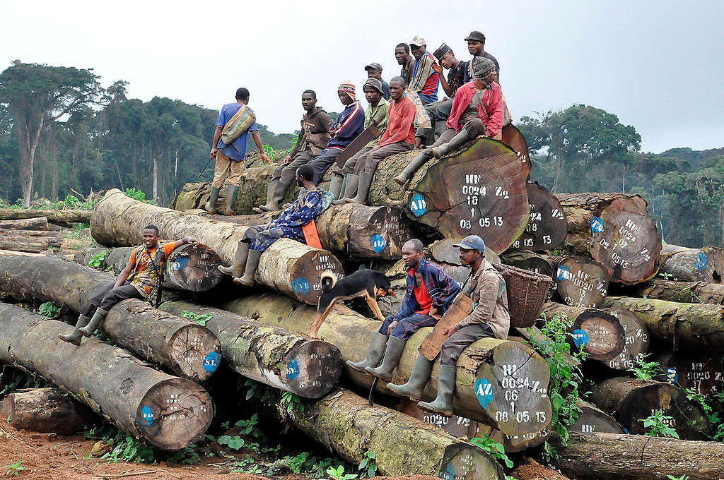 Villagers Visit Oil Palm Plantation in Cameroon. © Jean-Pierre Kepseu / Greenpeace