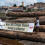 African Union urged to address the threat of Congo forest logging driving  extreme weather across sub-Saharan Africa