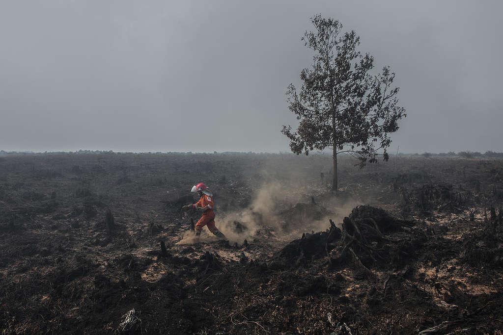 FFP Deployment at PT SUM Concession in Kubu Raya, West Kalimantan. © Rendra Hernawan