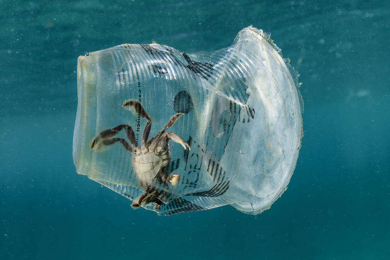 A crab was trapped inside a discarded Zagu milktea cup in Verde Island Passage, the epicenter of global marine biodiversity, in Batangas City, the Philippines.
