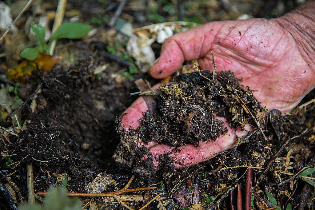 Image of hand holding dark soil matter