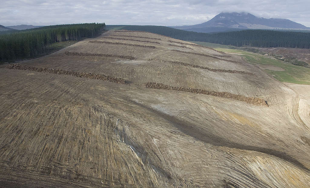 Deforested areas of land cleared as part of Wairakei Pastoral's mega-farm near Taupo, 2008. Photo © Greenpeace / John Cowpland