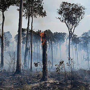 No blank check for enemies of the environment in Brazil