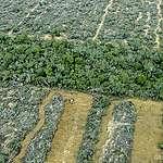Salta, Julio de 2013. Fotos Aereas del desmonte en la Finca San Francisco, Provincia de Salta.  (c) Greenpeace