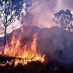 Greenpeace advierte que el fuego ya arrasó casi 5 mil hectáreas del Parque Nacional Calilegua