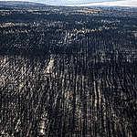 Impactantes imágenes de las áreas afectadas por los incendios en la Patagonia