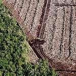 UE : Sabotage du processus législatif par les entreprises impliquées dans la déforestation