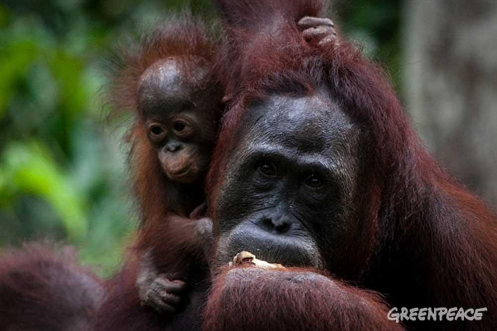 Huile de palme : belles avancées en Indonésie !