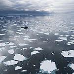 """Greenpeace over nieuw IPCC-rapport: """"Nu of nooit voor het klimaat"""""""