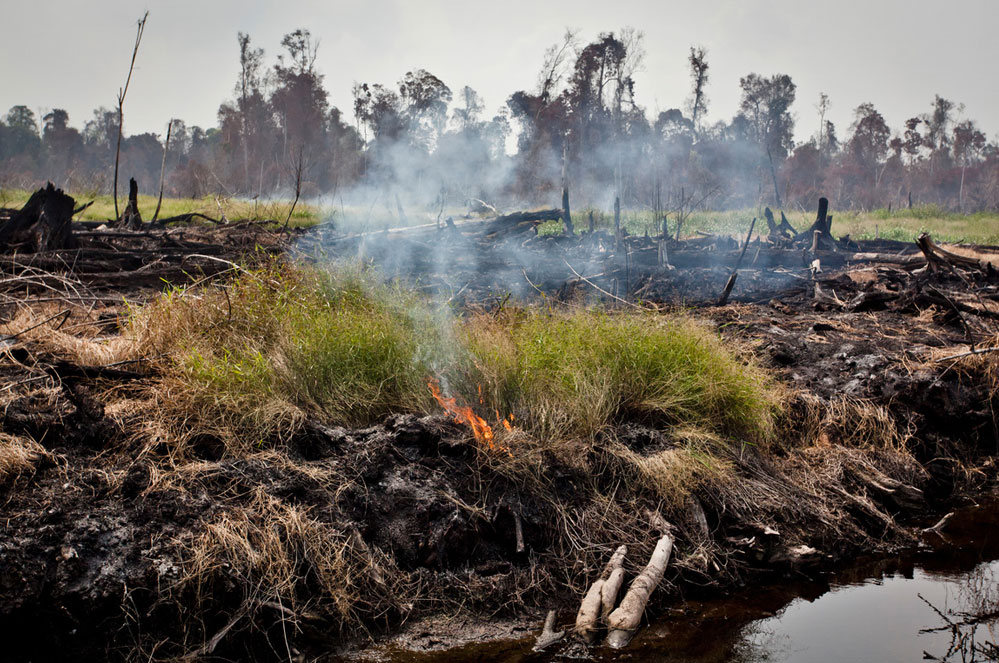 Corona, ontbossing, en landbouw: zo zit dat