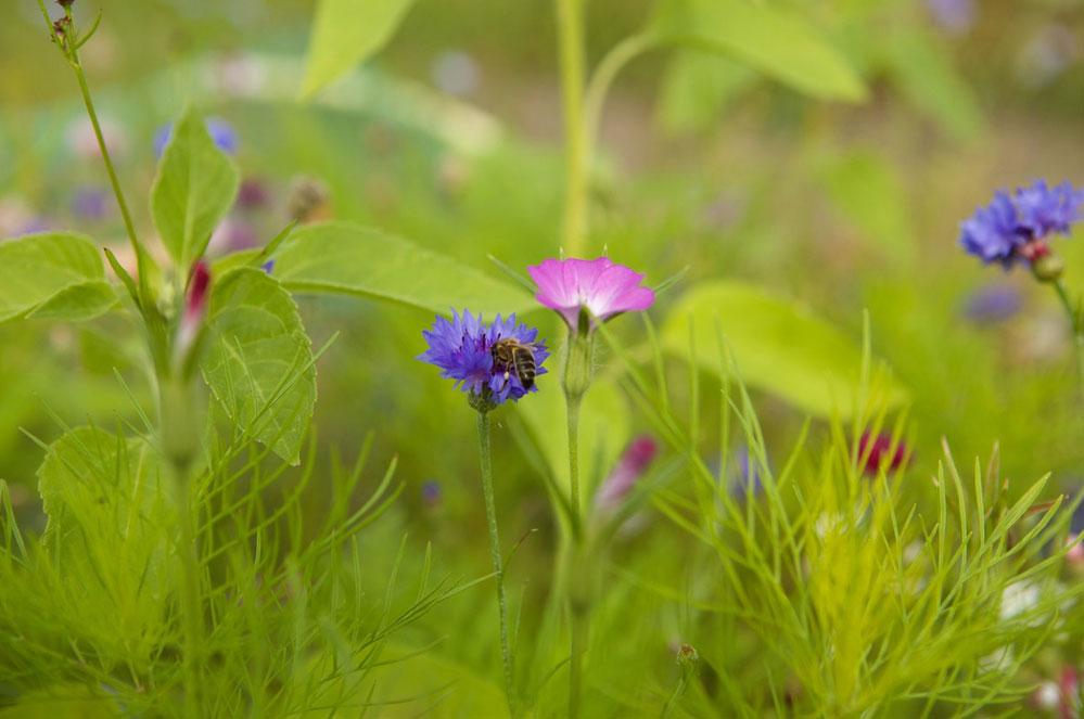 Activité DIY : je construis un hôtel à abeilles!